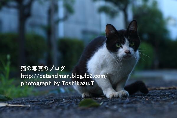 IMG_0386s.jpg