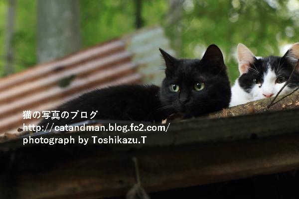 IMG_2801s.jpg