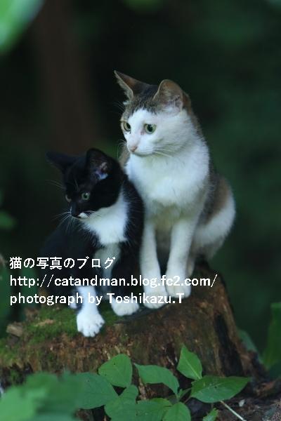 IMG_5608s.jpg