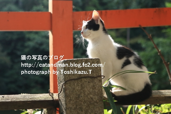 IMG_6082s.jpg