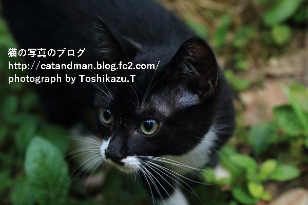 IMG_9966s.jpg