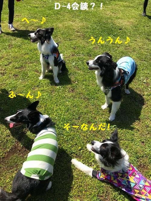 s-朝霧FDG 20180505 sora_90