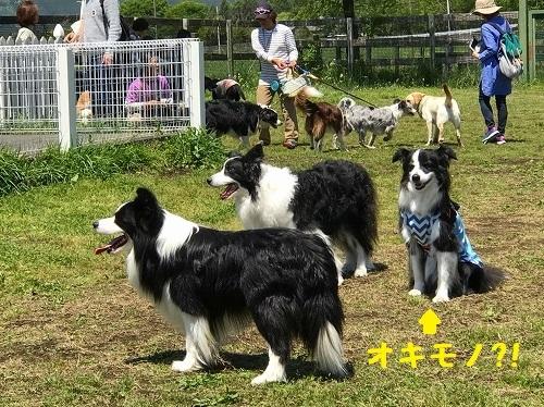 s-朝霧FDG 20180505 sora_134