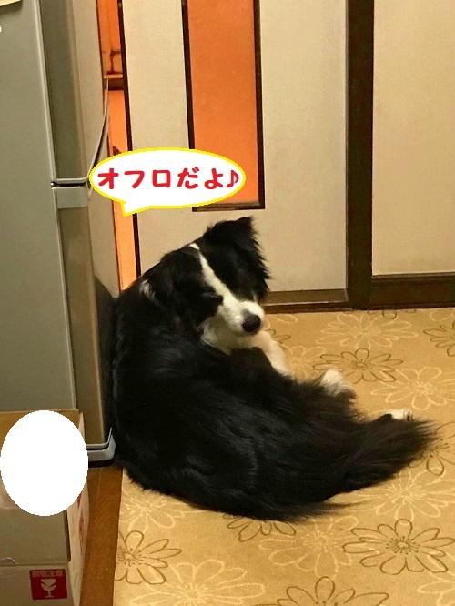 s-S_7798918850527.jpg