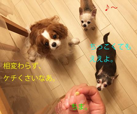 20180912 (5)