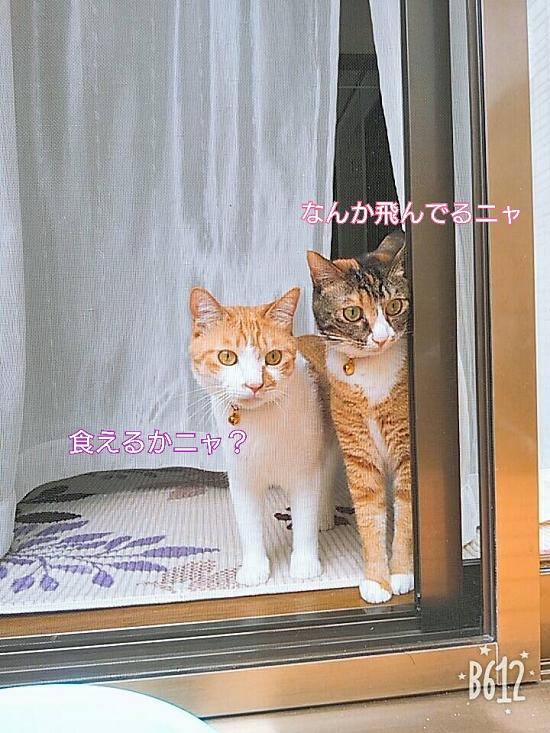 らん&きゃりー-38