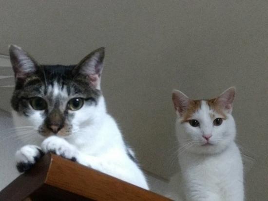 ゼクス&サワ-18