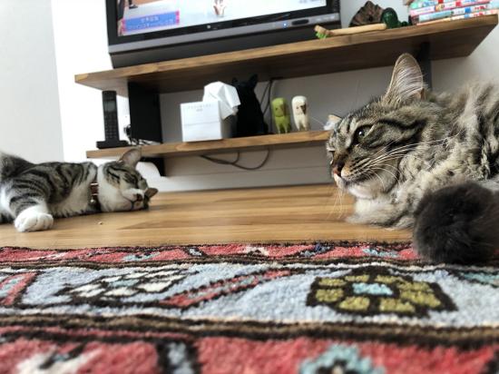 サニー&ムッタ-24
