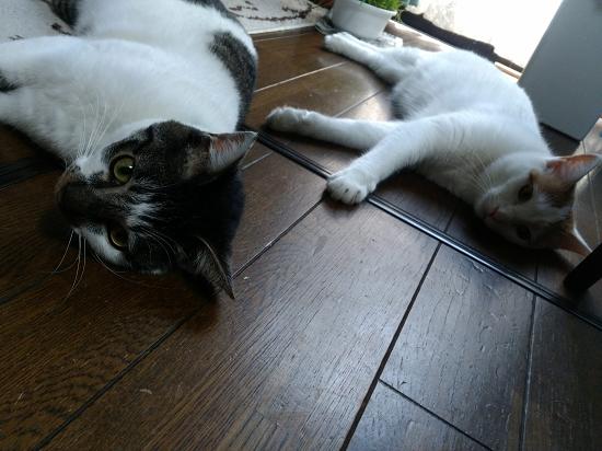 ゼクス&サワ-26