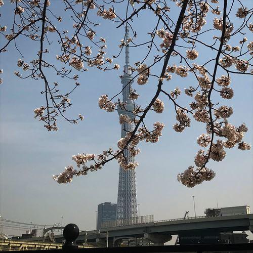 ゆうブログケロブログお花見2018-2 (4)
