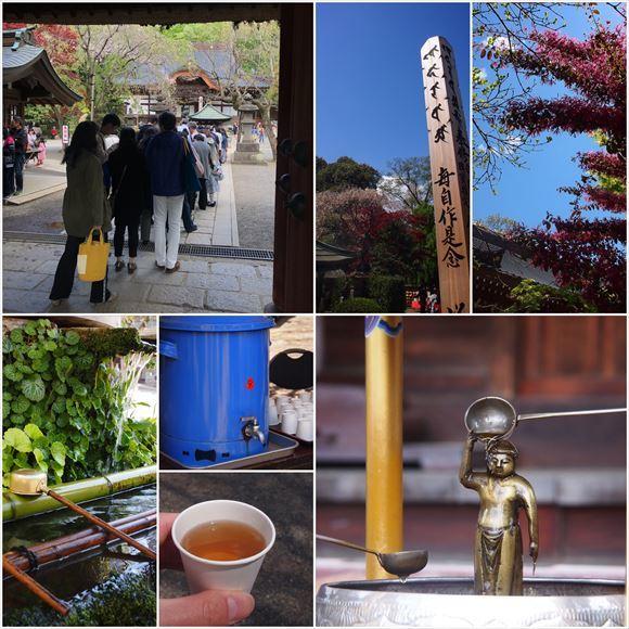 ゆうブログケロブログ花まつり2018 (11)