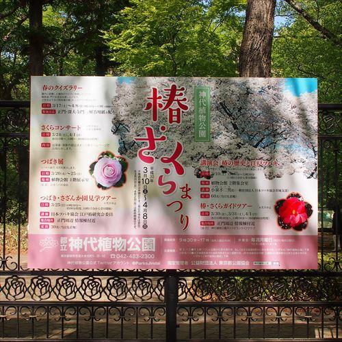 ゆうブログケロブログ花まつり2018 (13)