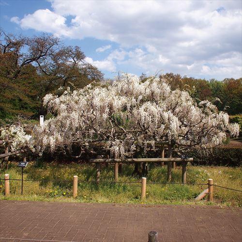 ゆうブログケロブログ花まつり2018 (34)
