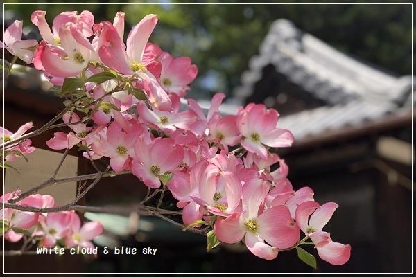 IMG_E8334-1.jpg