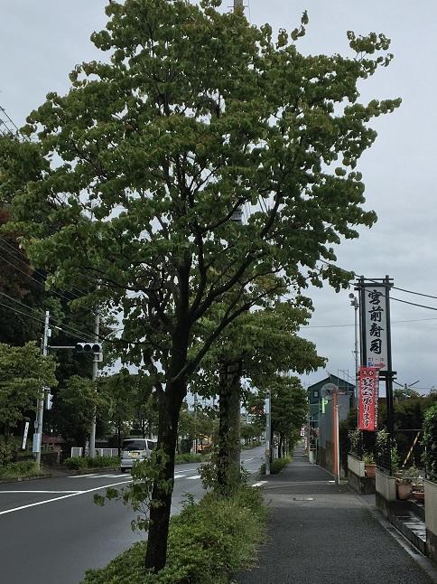 180902 miyamaezushi-24