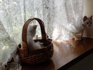 子猫七月十六日2