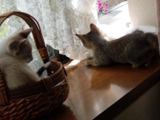子猫七月十六日3