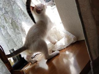 子猫七月十六日6