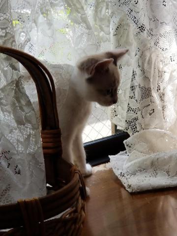 子猫七月十六日7