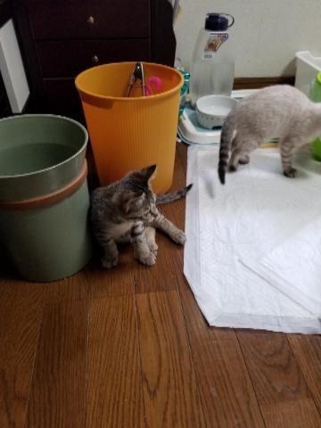 子猫七月二十一日5