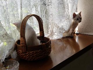 子猫七月二十一日6