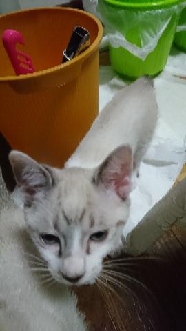 子猫七月二十四日