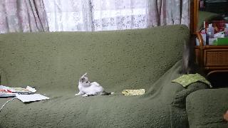 子猫七月二十四日4