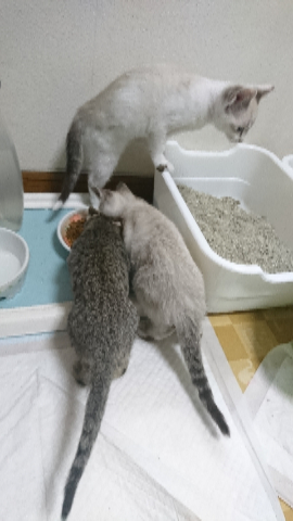 子猫七月二十四日5