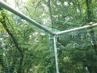 ネットの中で飛ぶスズメバチ!