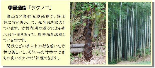 季節通信「タケノコ」