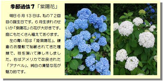 季節通信7紫陽花