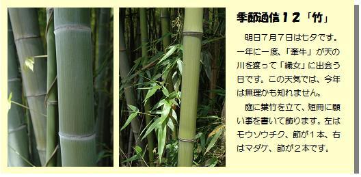 季節通信12「竹」