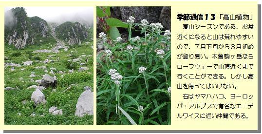 季節通信13高山植物