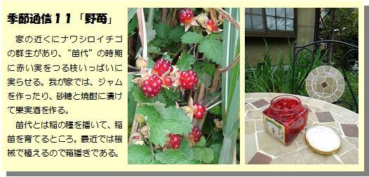 季節通信11野苺