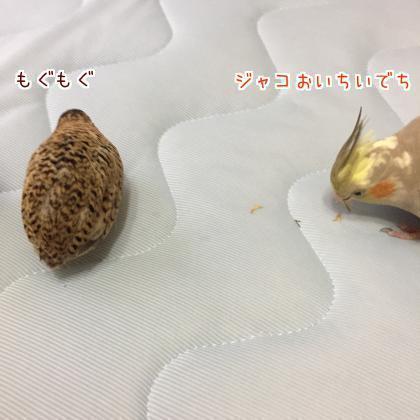 二太2018/05/04-1
