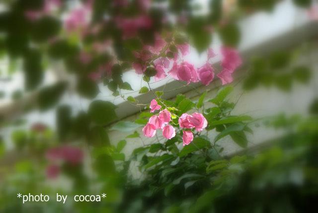DSC_0040 2016-05-01 9-58-10