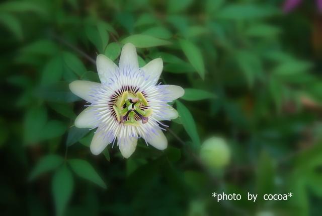 DSC_0126 2007-08-15 10-21-05