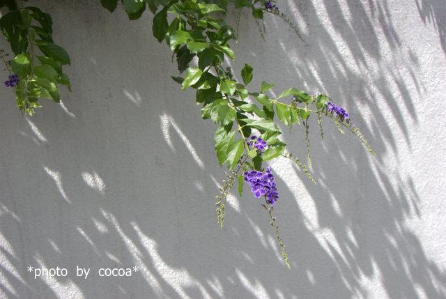 DSC_0049 2007-09-15 10-59-12