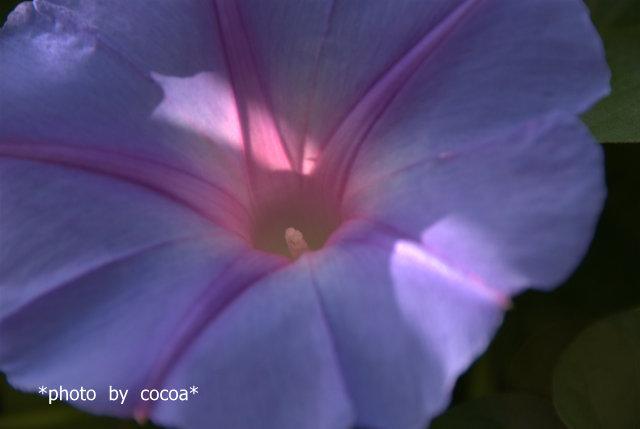 DSC_0092 2007-10-28 13-05-15