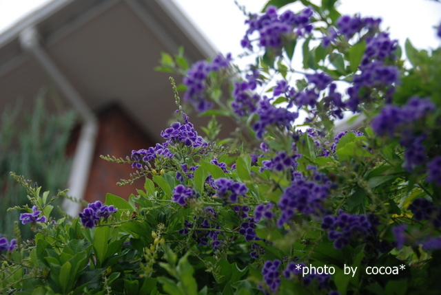 DSC_0054 2009-09-08 15-05-46