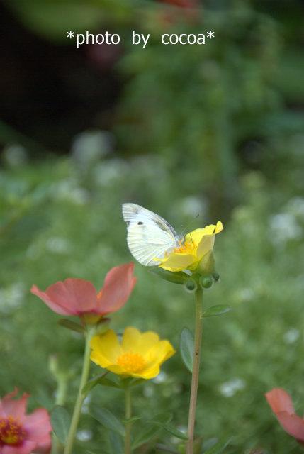 DSC_0089 2011-08-22 9-24-10