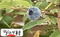 C-bulueberry_201809110819119c0.jpg