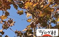 C-kaede_20180917080722524.jpg