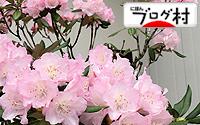 C-shakunage2_20180915085624e36.jpg