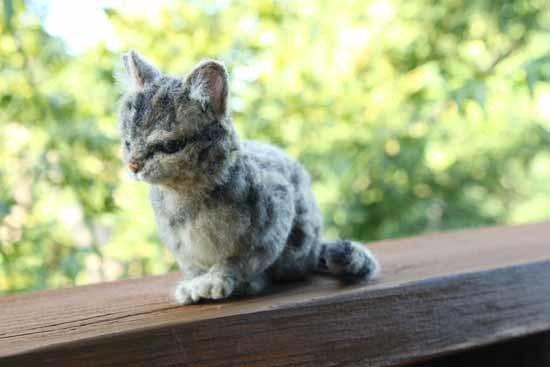 キジトラ猫0827-1