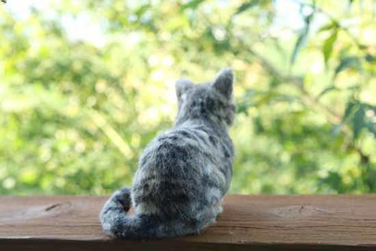 キジトラ猫0827-3