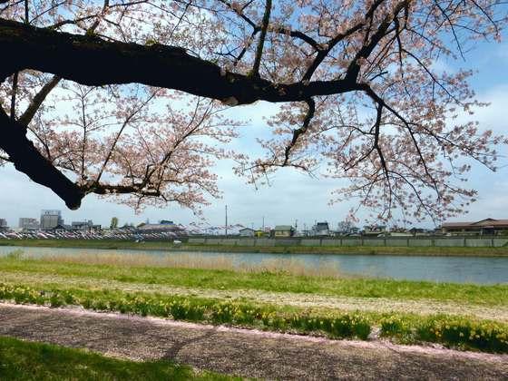 岩手・北上展勝地の桜<トリップノート4月公開記事①>