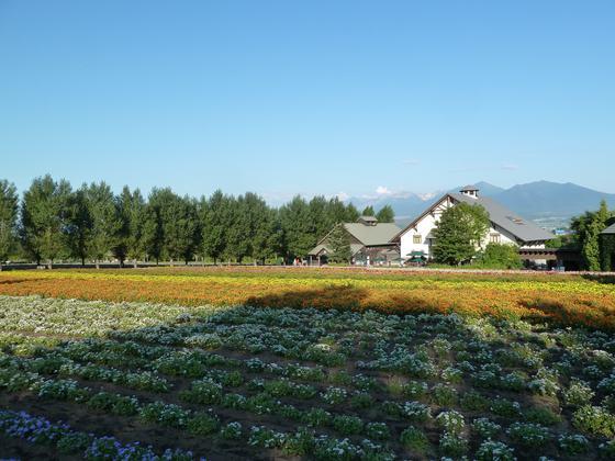 晩夏~秋の花が彩るファーム富田の花畑