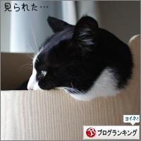 dai20180403_banner.jpg
