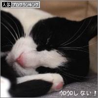 dai20180404_banner.jpg